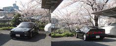 Sakura (Cherry tree) and CR-X Part 2 Oosaka Japan 2012 Honda Crx, Cherry Tree, Commercial Vehicle, Japan, Cherry Blossom Tree, Japanese