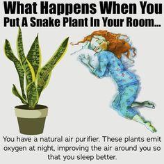 Diy Garden, Garden Projects, Garden Plants, House Plants, Container Gardening, Gardening Tips, Herbs For Health, Inside Plants, Best Indoor Plants