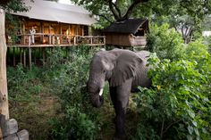Tubu Tree lies on Hunda Island in the Jao Concession, Okavango Delta, Botswana; it comprises eight tents and offers exciting land and water-based safari activities. Tree Camping, Wooden Walkways, Okavango Delta, Garden Trees, African Safari, Wildlife Photography, Wilderness, Places To Visit