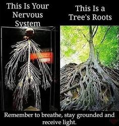 Remember to breathe, stay grounded & receive light 😊 roots presenceofmind calming therapy crystalhealing crystals chakras spiritual healing energy grounding grounded light breathe Yoga Mantras, Tree Roots, Spiritual Awakening, Spiritual Healer, Spiritual Growth, Spiritual Quotes, Wisdom Quotes, Fun Facts, Self