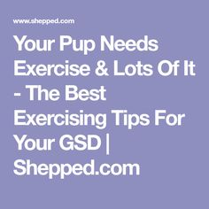 Your Pup Needs Exercise & Lots Of It - The Best Exercising Tips For Your GSD | Shepped.com