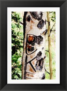 Aspen Tree Framed Art