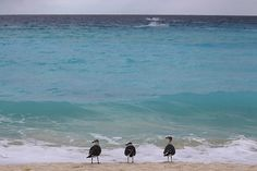 In pictures: The week in wildlife   Gulls on the beach in Cancún, Mexico. The rate of decline of waterbird populations has slightly decreased over the last three decades, scientists found this week. However, 47% of the waterbird populations are still declining and only 16% are increasing. The status of waterbirds is improving mainly in North America and Europe, while it is least favourable in Asia. Especially long distance migrants appear to be vulnerable   Dario Lopez-Mills/AP