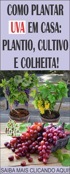 Landscape Design, Garden Design, Growing Grapes, Edible Plants, Ceviche, Outdoor Plants, Hydroponics, Beautiful Flowers, Vegetables