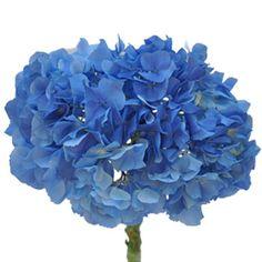 FiftyFlowers.com - Hydrangea Dark Blue Flower