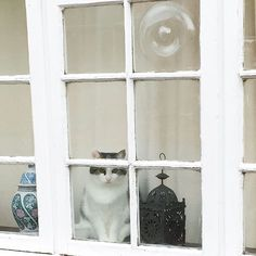 "cat-in-windows: ""via @becboc93 Instagram photo 