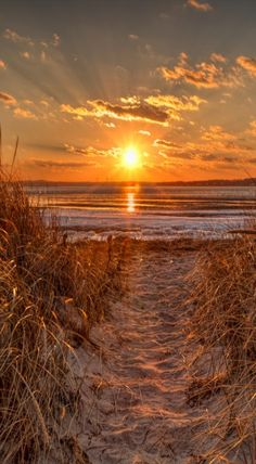 """simply-beautiful-world: """" ❥‿↗⁀simply-beautiful-world sundxwn: """" Path by Bob Linton """" """" Beautiful World, Beautiful Places, Beautiful Pictures, Simply Beautiful, Foto Picture, Illustration Photo, Ocean Pictures, Quelques Photos, Ocean Sunset"""