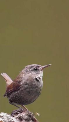 Most Beautiful Birds, Pretty Birds, Animals Beautiful, Birds Voice, Best Pet Birds, Amazing Animal Pictures, Sounds Of Birds, Funny Parrots, World Birds