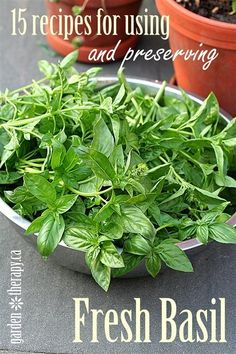15 Ways to Use and Preserve Fresh Basil - Garden Therapy - cook morning eggs with basil butter? Fresh Basil Recipes, Herb Recipes, Canning Recipes, Vegan Recipes, Dinner Recipes, Spices And Herbs, Fresh Herbs, Growing Herbs, Food Hacks