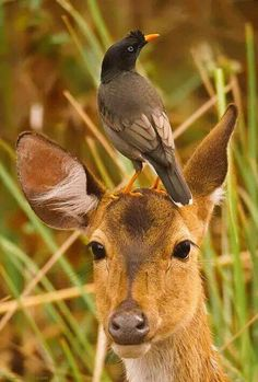 Super cute baby animals - Funny Wild Animal This video is a compilation of wildlife of animal babies. They're very cute animals just you have seen. Nature Animals, Animals And Pets, Beautiful Birds, Animals Beautiful, Beautiful Pictures, Amazing Photos, Cute Baby Animals, Funny Animals, Photo Animaliere