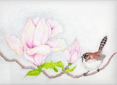 Rose Flower Drawings In Pencil 14930 Hd Wallpapers Pictures in Flowers - Ziizone.net