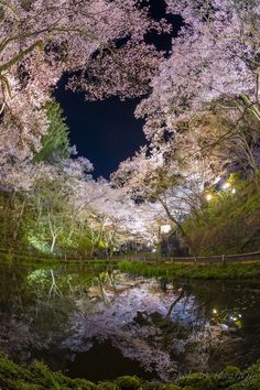 """lifeisverybeautiful: """"Cherry Blossom, Takato Castle Ruins Park, Nagano, Japan via 幻鏡 PHOTOHITO """" Cherry Blossom Japan, Cherry Blossoms, Cool Photos, Beautiful Pictures, Raindrops And Roses, Japanese Landscape, Mother Earth, Beautiful Landscapes, Beautiful World"""