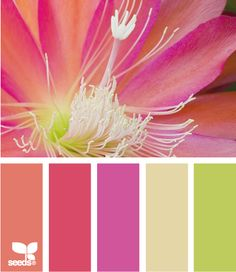 Rotate seasonal decor- summer Color: Color Bloom y Design Seeds - coral, raspberry, magenta, beige, moss green.