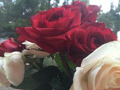 Present roses Flower Photos, My Photos, Bouquet, Roses, Flowers, Plants, Life, Pink, Bouquet Of Flowers