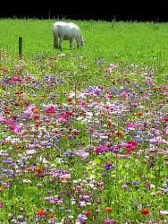 Alternative écologique au gazon, la prairie fleurie est tendance. Facile à créer et à entretenir, elle permet de favoriser la biodiversité dans son jardin. Pour attirer les papillons, abeilles et oiseaux chez vous, semez une prairie fleurie ! Voici comment faire. par Audrey
