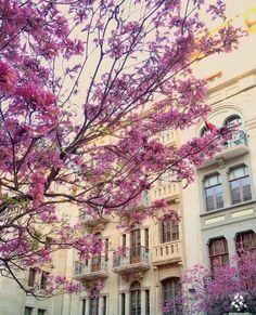Good morning Spring from the amazing #Beirut  By @alainaboujaoude #WeAreLebanon  #Lebanon