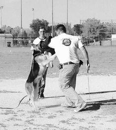 German Shepherd dog training in Abilene, TX.