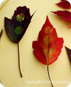 Photosynthesis Experiment .....what a great idea for the class since we're studying leaves.: