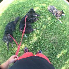 Karvajalat varjossa. #pooch #mutt #kesähiki #fb