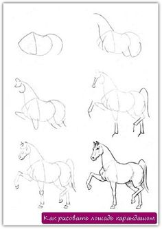 How to draw a horse pencil. Lesson №8