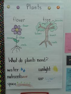 Today in First Grade...: Plants and a Sale!