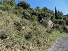 Sanremo (IM) - tra la Frazione San Romolo e la Frazione Coldirodi