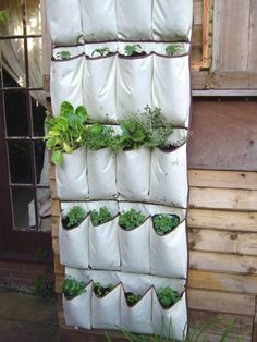 Hang your shoe storage caddy on the side of your garage to cultivate seedlings. Brilliant!