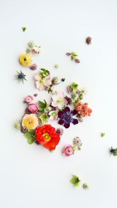 Flowers, flowers...