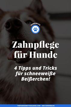 Anzeige. Damit deinem Hündchen das Zähneputzen leichter fällt, habe ich nützliche Tipps für eine besonders wirksame Zahnpflege für Hunde am Blog gesammelt. www.thepawsometyroleans.com Blog, Dental Health, Dog Food, Health And Fitness, Interesting Facts, Parenting, Puppys, Tips And Tricks, Hiking