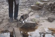 It's true cats do not like water! ****FOLLOW ALL THE WAY THRU TO SEE VIDEO******