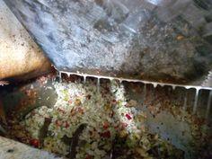 """En la #trituradora lo que se conoce en #asturias como """"#mayar las #manzanas"""" esta pulpa triturada se llama #magaya"""