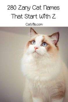 Are you a fur parent who would love to get a unique name for your lovely kitty? Check out this long list of charming cat names that start with Z and pick yours! Grey Cat Names, Cute Cat Names, Pet Names, Cool Names, Unique Cat Names, Unique Cats, Superhero Names, Best Superhero, Badass Cat Names