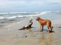 Making friends at Del Mar dog beach