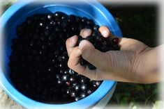 How to Grow Aronia Berries (Chokeberry), a Superfruit - Gardening Channel Ruska Salata, Serbian Recipes, Emergency Preparation, Sweet Cakes, Wine Making, Fitness Nutrition, Bread Baking, Smoothie Recipes, Vodka