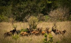 Shimba Hills National Reserve is derived from the rare endangered Sable Antelope that are only found in this beautiful lush dense forested reserve. It is in the coastal t region of Kenya. The reserve has sharp slopes ending with a scenic fall.