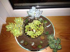 Combinatie vetplanten, stekjes en waterplantje.