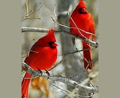 A couple of cardinals