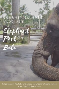 Wir besuchen Elefanten auf Bali. Bali, Journey, Strand, Elephant, Animals, Elephants, Horseback Riding, Island, Vacations