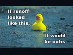 Stormwater Run-off is NOT Cute