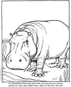 zoo animal hippo coloring animals drawings line pages hippopotamus printable drawing outline wild easy adult raisingourkids