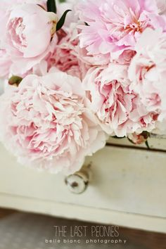there's just something about peonies! BELLE BLANC