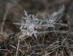"""Snowflakes"" Micro Photography by: Andrew Osokin – avec Rosy Ca."