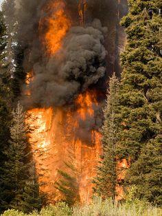 The Springs Fire, Banks-Garden Valley, Idaho, Boise National Forest, August, 2012, Kari Greer