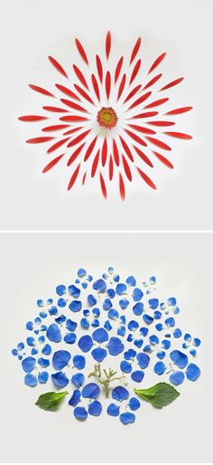 for a real Mother's Day floral arrangement, try Exploded Flowers by Singapore artist Fong Qi Wei. Wei, a conceptual Real Flowers, Floral Flowers, Singapore Art, Graffiti Artwork, Event Photography, Print Pictures, Creative Inspiration, Red And Blue, Wei Wei