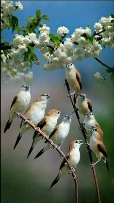Most Popular Photography Nature Animals Pretty Birds Ideas Pretty Birds, Cute Birds, Small Birds, Colorful Birds, Beautiful Birds, Animals Beautiful, Nature Animals, Animals And Pets, Kinds Of Birds