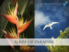 French Polynesia is a vast territory with a splendid fauna and flora, to contemplate without moderation ! http://www.etahititravel.com/