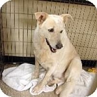 Adopt A Pet :: Lexi's Levi aka Freckles - North Las Vegas, NV