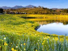Summer Nature Wallpaper Grass Lake Hd View Flower