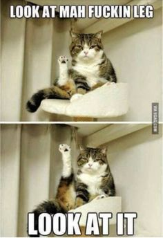 100 Pet Memes That Will Make You LOL Over And Over Again I Love Cats, Crazy Cats, Cute Cats, Animal Pictures, Funny Pictures, Funny Animals, Cute Animals, Funny Puns, Cat Boarding