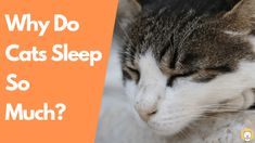 Why Do Cats Sleep So Much? Kitty Cats blog     #cats #cat #happycats #catgram #catsofworld #catofday #dailycat #sillycat #ilovemycats #prettycat #housecat #catsareawesome #sweetcat Cat Yawning, Cat Water Fountain, Owning A Cat, Silly Cats, Cat Sleeping, Pretty Cats, Save Energy, Something To Do, Kittens